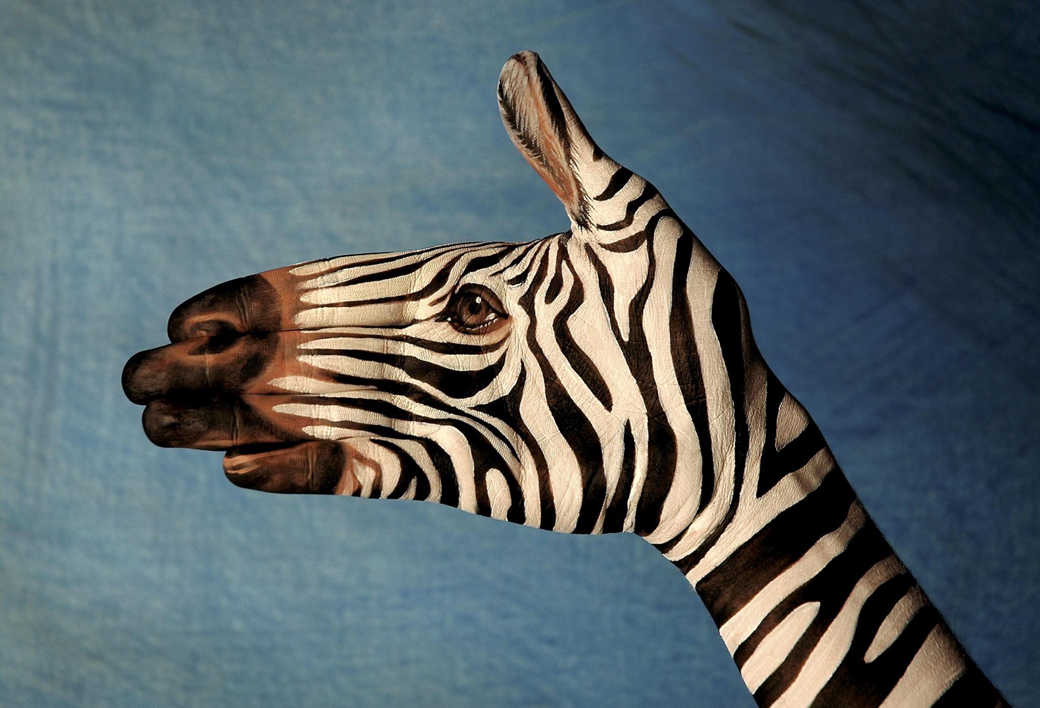 Zebra_-_Zebra_01