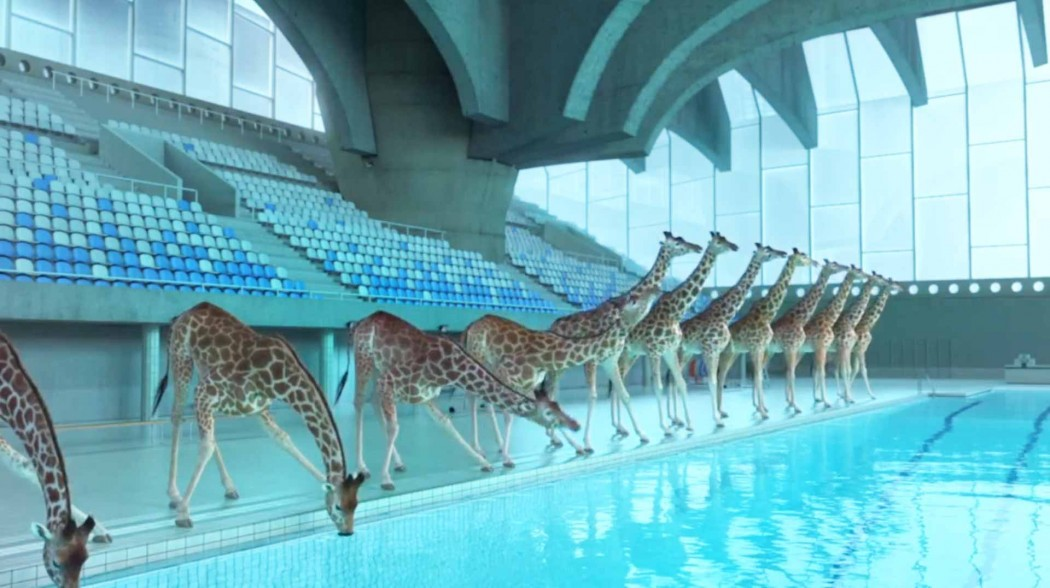 high-diving-giraffes-image10