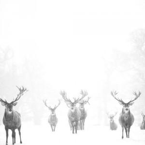 Snow family 2