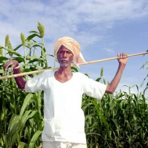 Sorghum bioethanol farmer
