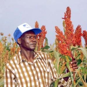 Kenyan sorghum farmer