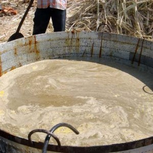 Sorghum bioethanol
