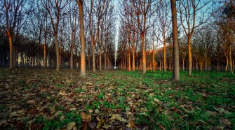 FORESTS: Innovation from multiple to seasonal cropping