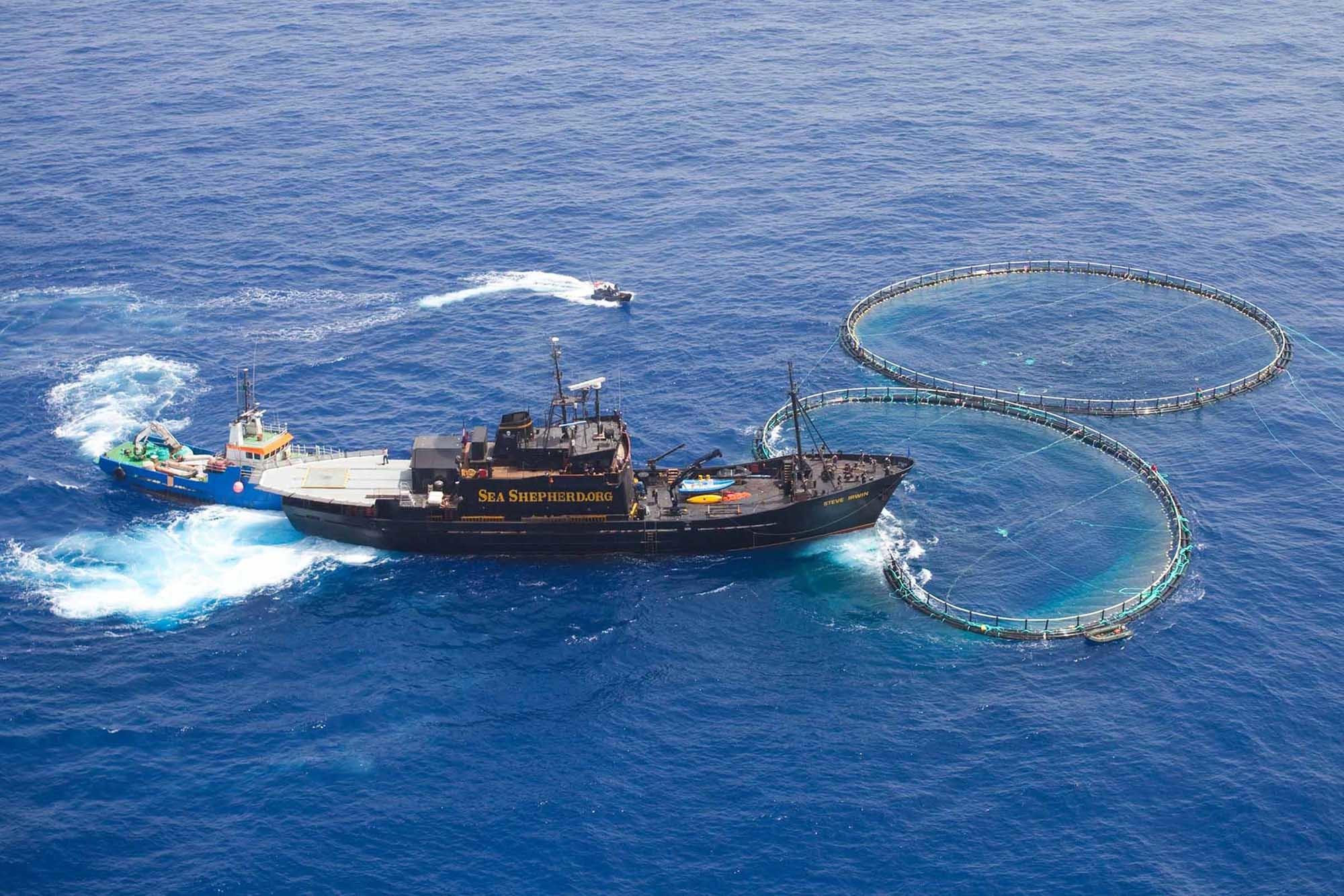 Sea Shepherd off of the coast of Libya