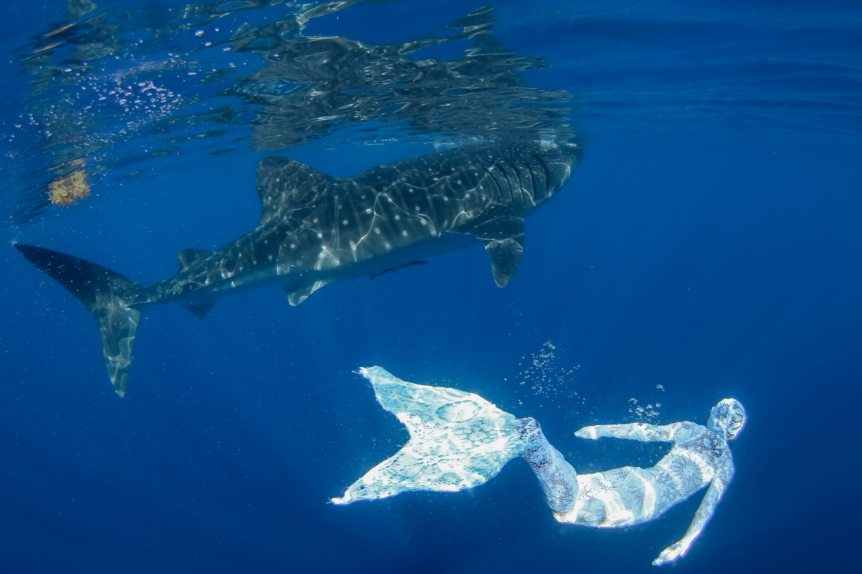 Whale Shark White Mermaid 1