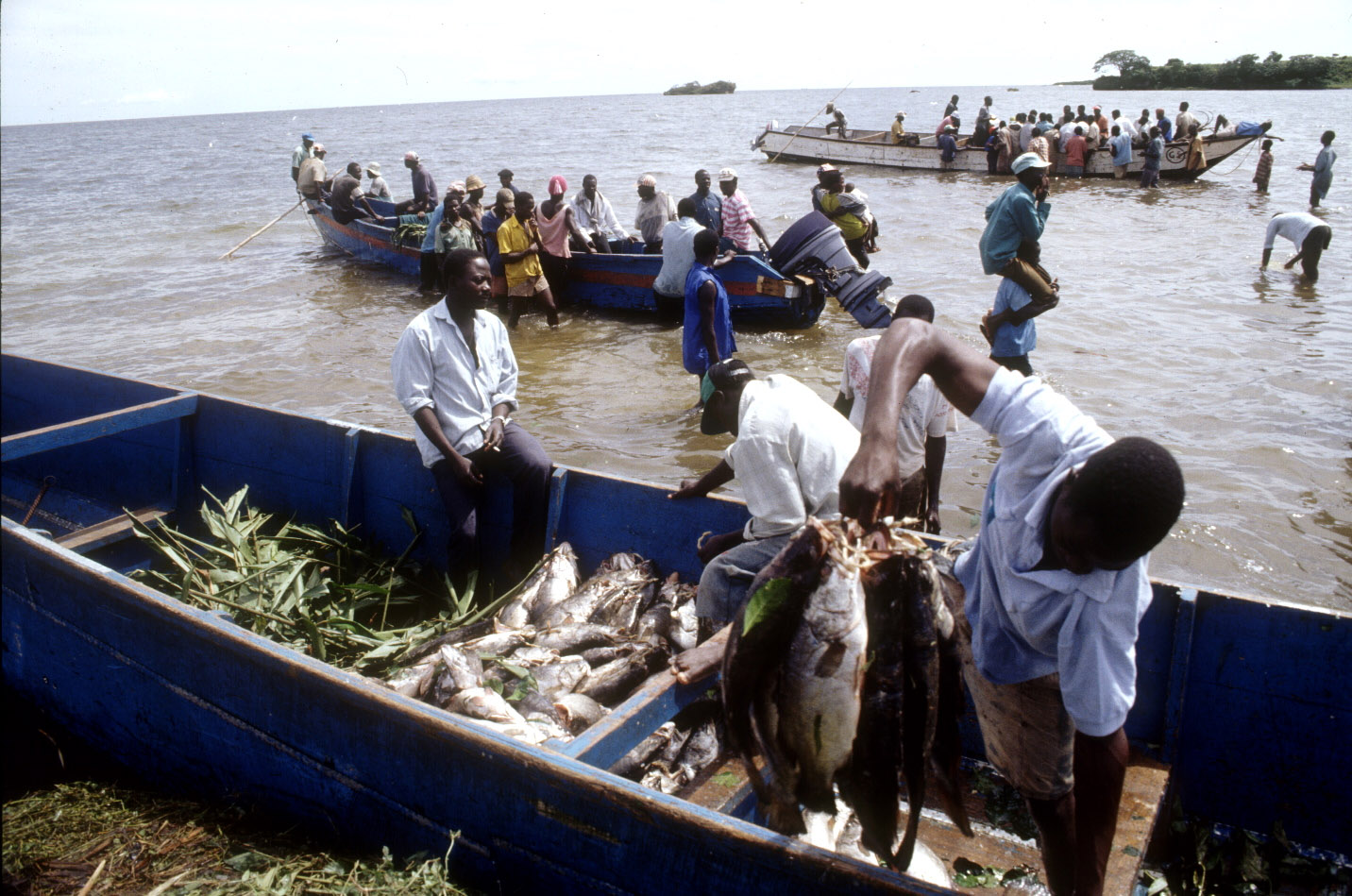 Unloading fish as part of the daily arrival of fishing boats on Lake Victoria near Entebbe.