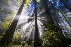AndyBest_InstrumentRedwoods-4-L
