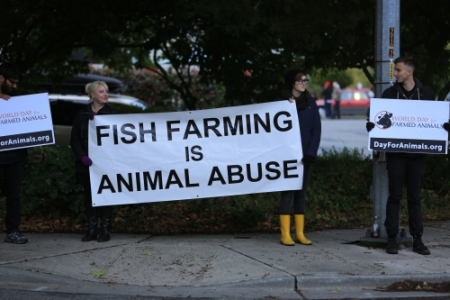 Protesters near the American Gold Seafood Company, Seattle 2013 (source)