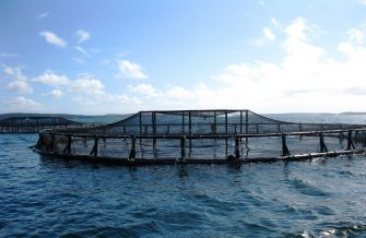 FARMING IN WATER: THE CHALLENGES OF AQUACULTURE
