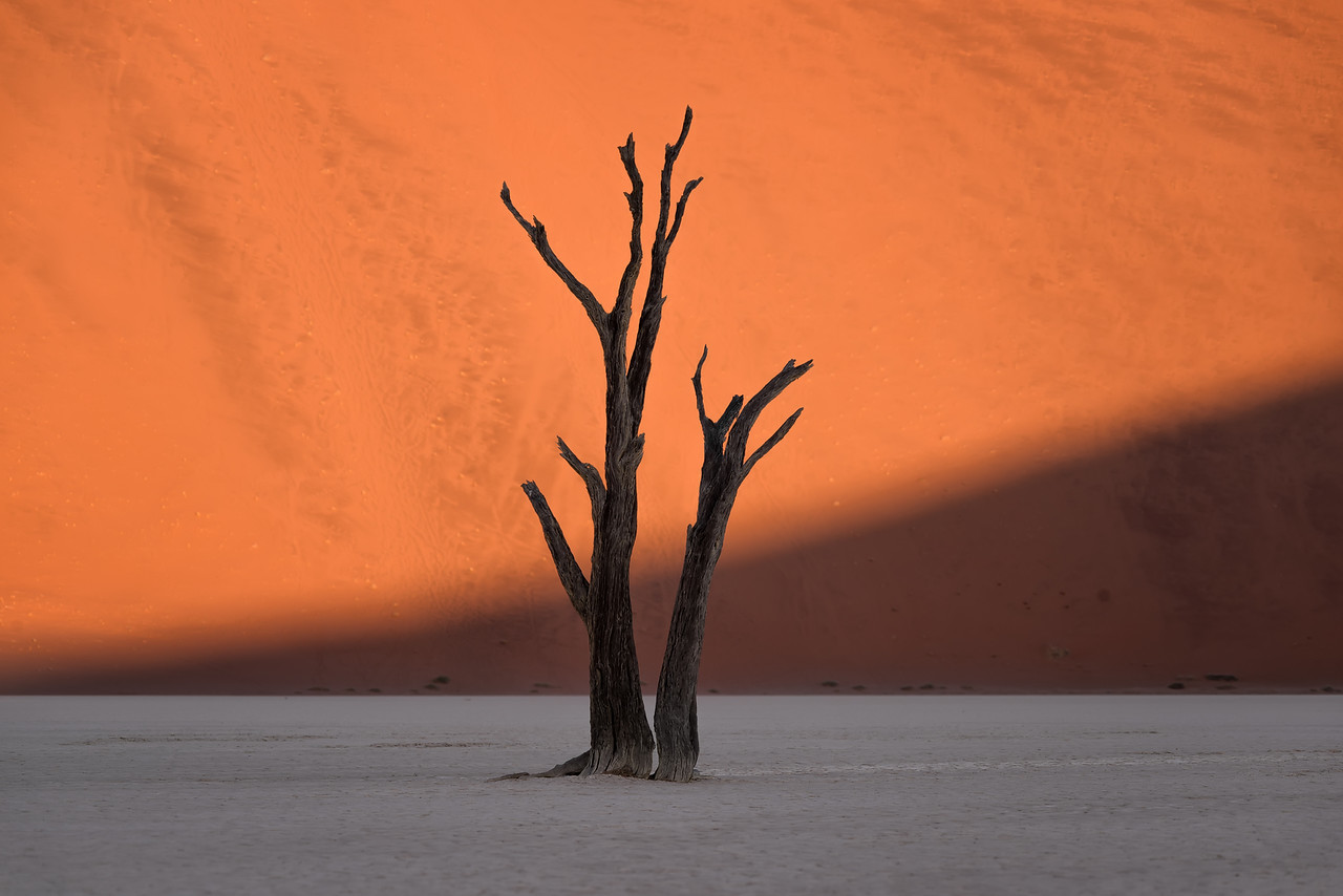 """The sun strikes the bright orange sand dunes behind the skeleton of dead tree in Deadvlei, Namibia."""
