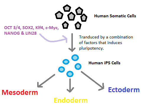 Overview_of_iPS_cells