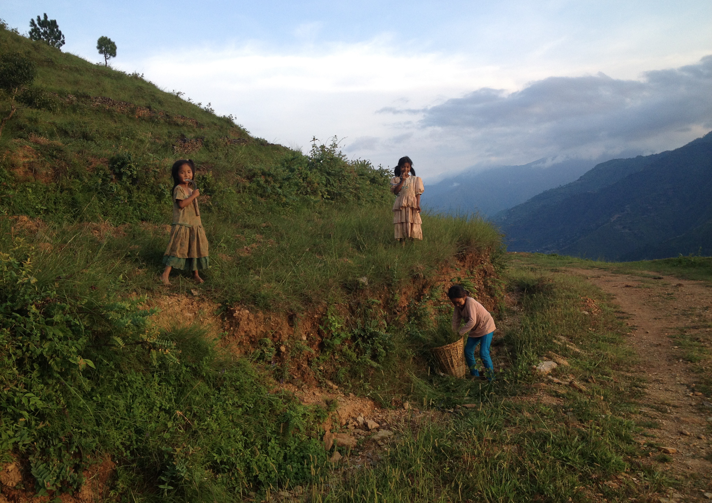 Photo: A group of young 7-10 year old girls gathering grass from the nearby hills on their way home from school. Photo Credit: Katherine Baxter