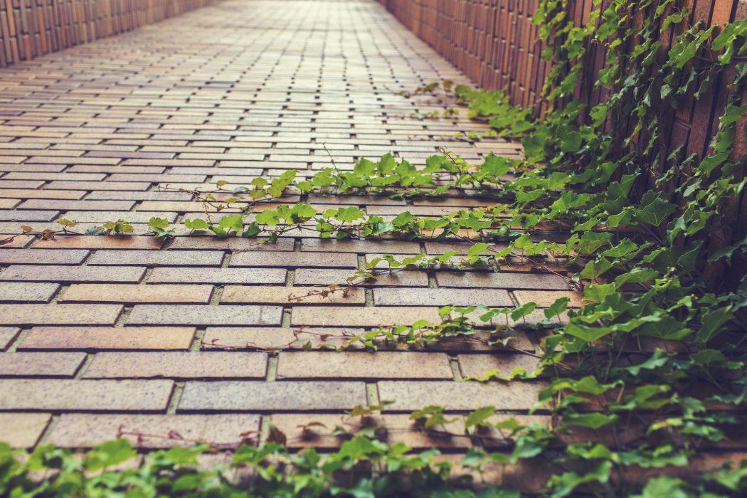 greenery, ivy, wall
