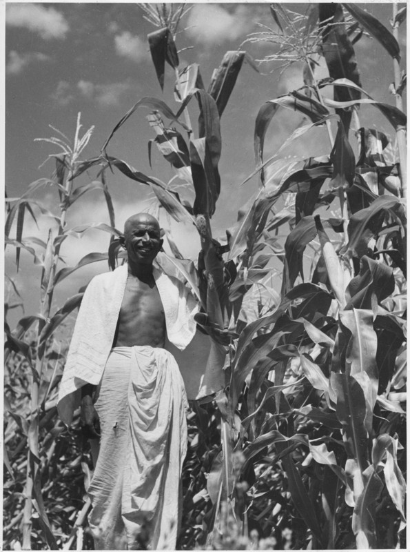 Corn Farm India