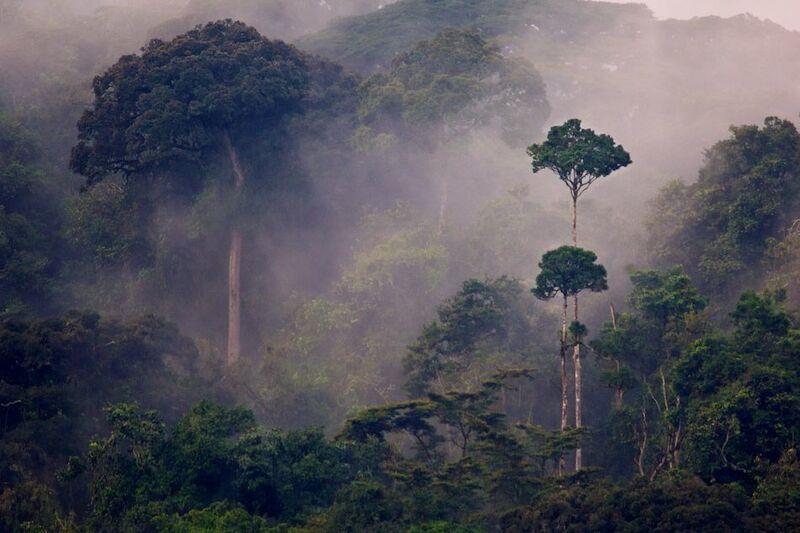 Rw nyungwe-forest