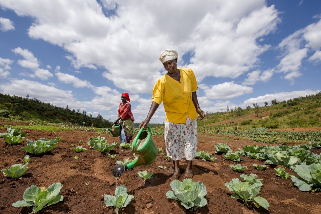 WfWI Rwanda agri business credit Alison Wright