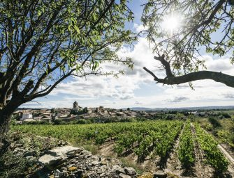 Chateau Maris, A Winery That Saves The Planet