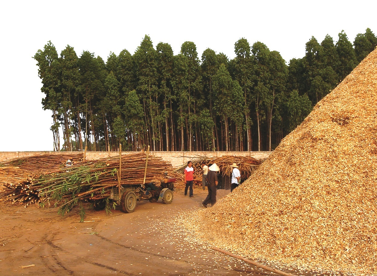 wood chips pile (1)