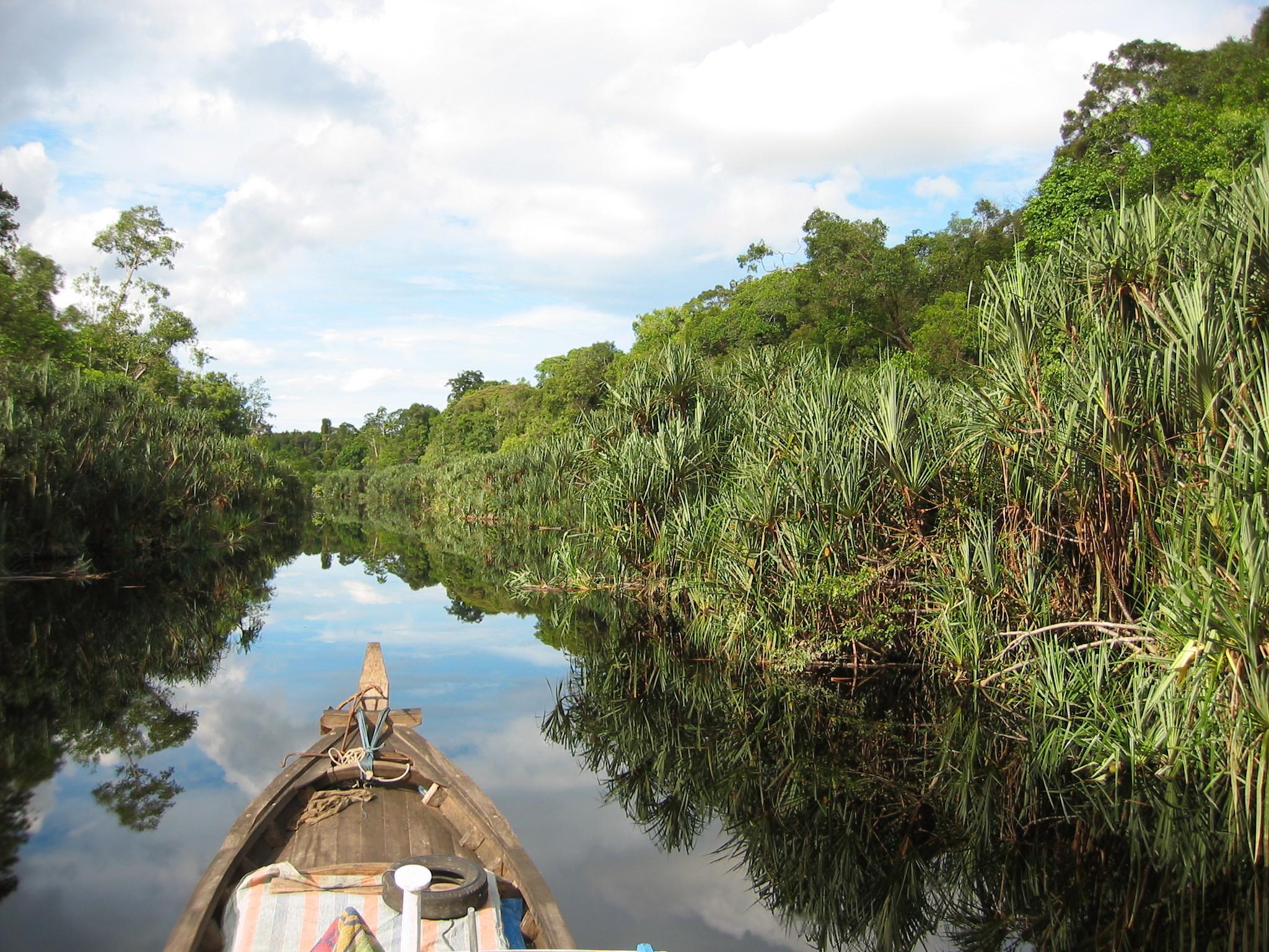 3-WG- Pristine peatswamp forest in Berbak National Park (Sumatra)