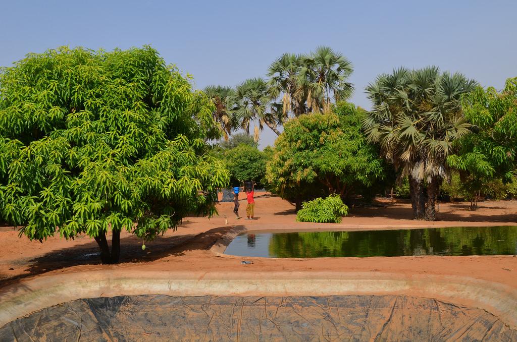 Fish pond outside Niamey, Niger – IATI