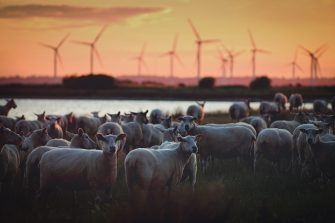Climate Action: The Foundation of Sustainable Development