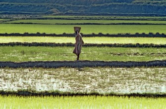 Innovations in Food Production – An Urgent Need
