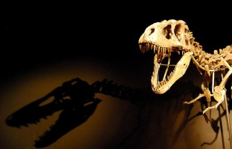 Resurrection of Ancient Animals and Plants: Is Man next?
