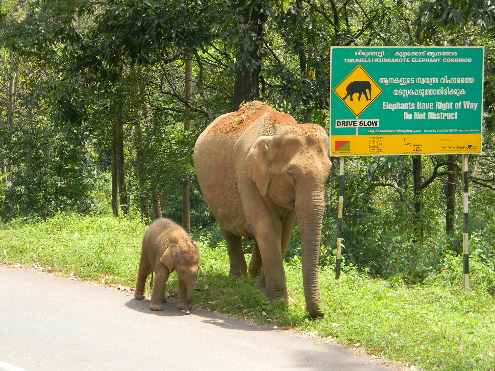Elephant & calf in front of board 2 (c) Ramith M. - WTI