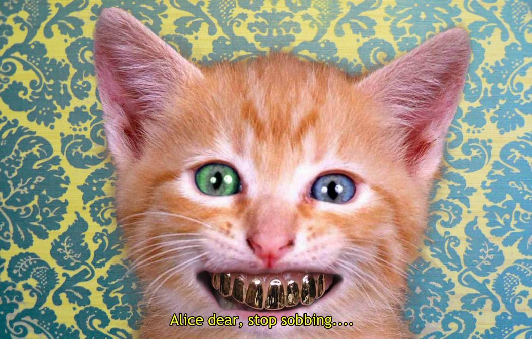 gatto denti 1