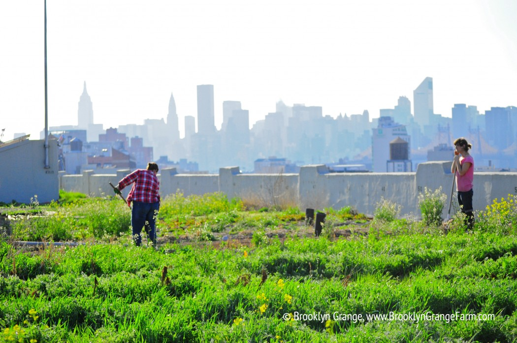 spring at the long island city farm