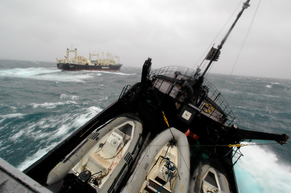SSCS ship, Farley Mowat, hunts Japanese whale poaching vessels