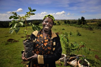 SDG 15: Planting New Roots for a Fertile Planet