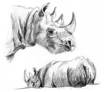 Scientific Illustration: Martina Bisaz