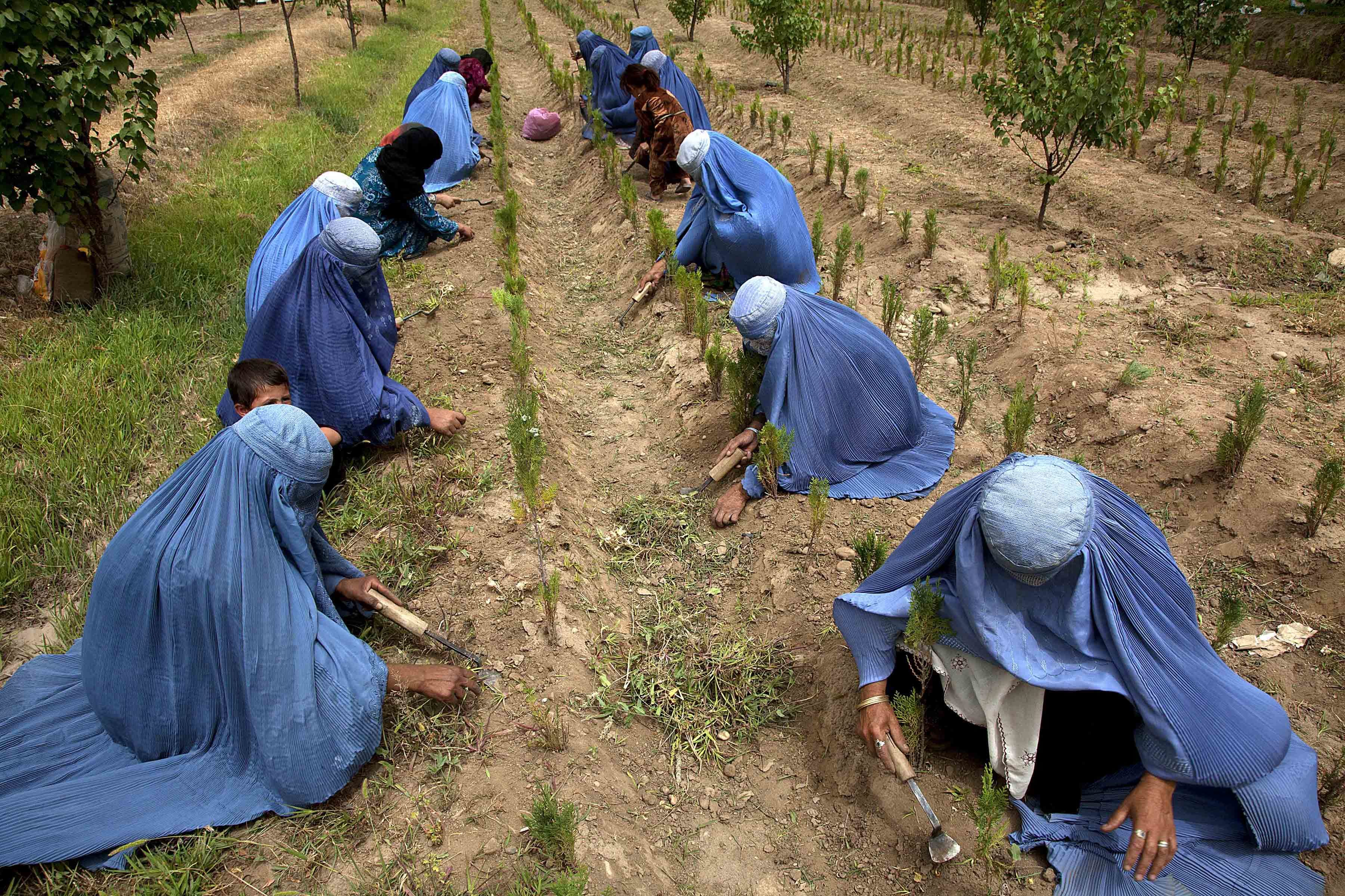 The United Nations, through its International Fund for Agricultural Development (IFAD), will provide a grant of US$58 million to Afghanistan for an initiative aimed at improving food security by enhancing the skills, services and income opportunities of rural women and men. The project seeks to improve agriculture and livestock productivity by building the capacity of community organizations and local government agencies to buoy locally-owned and led development.