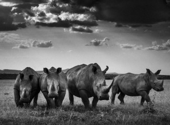 Reestablishing A Connection: Interview with Laurent Baheux