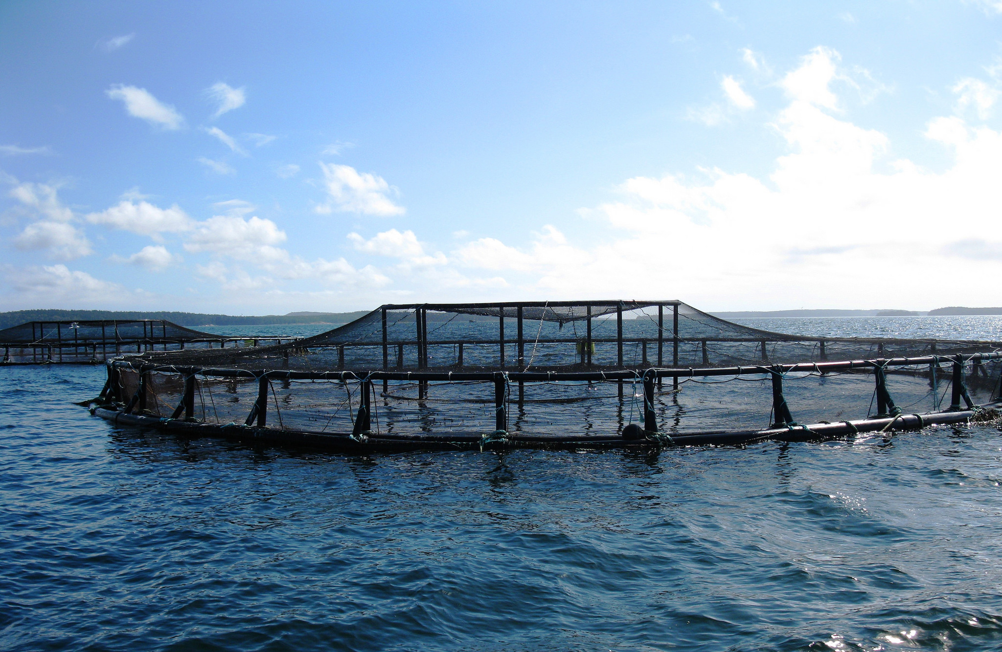 FARMING IN WATER: THE CHALLENGES OF AQUACULTURE - Impakter