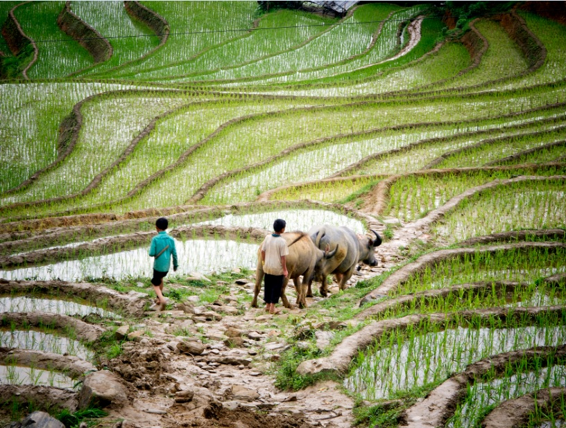 Food and Agriculture in Viet Nam_Impakter