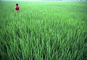Strengthening of China's Capacity in Agricultural Market Monitoring and Agricultural Outlook