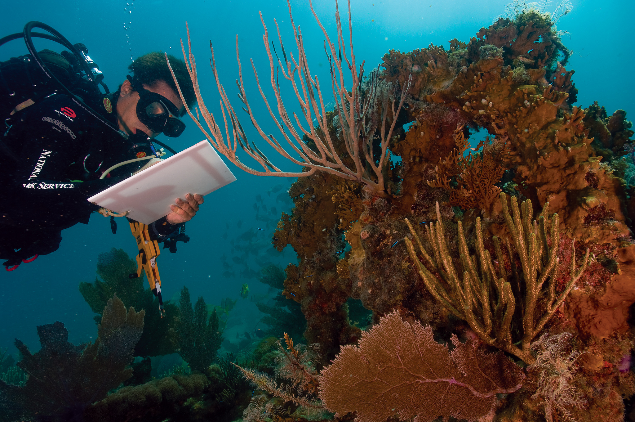 Coral reef destruction essay help
