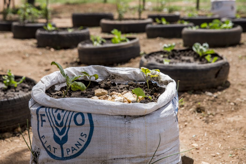 FAO community farming projects
