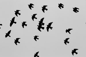 Migratory Movement Impakter