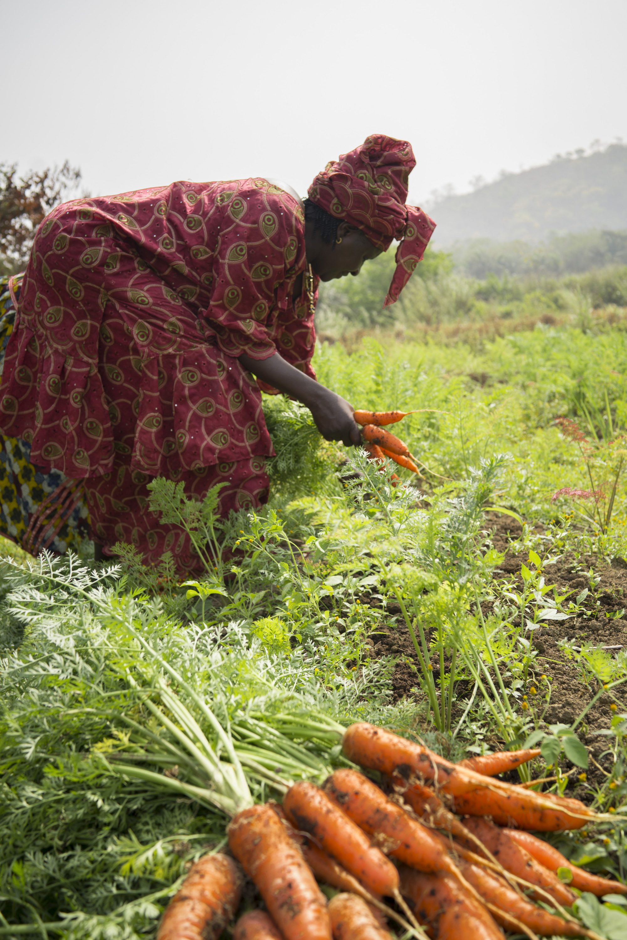 Africa Solidarity Trust Fund boosts Agribusiness Centers in Sierra Leone after Ebola outbreak