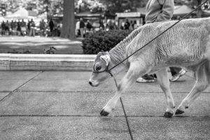 evolve, impakter, cow, walking