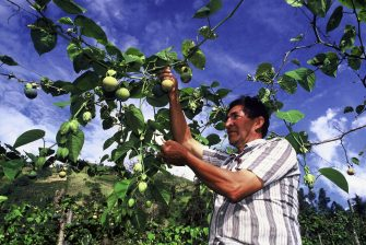 Food Systems: at the Heart of Sustainable Development