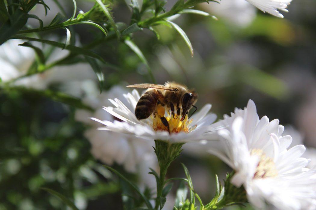 birds-bees-sex-ed