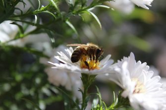 Op-Ed: The Birds and the Bees
