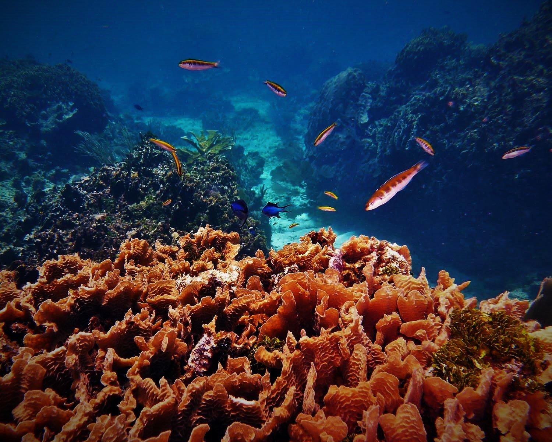 Reef scape_Roatan Honduras_© Noel Wingers (1)
