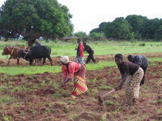 Farmer Reaps the Benefit of Embracing Conservation Agriculture