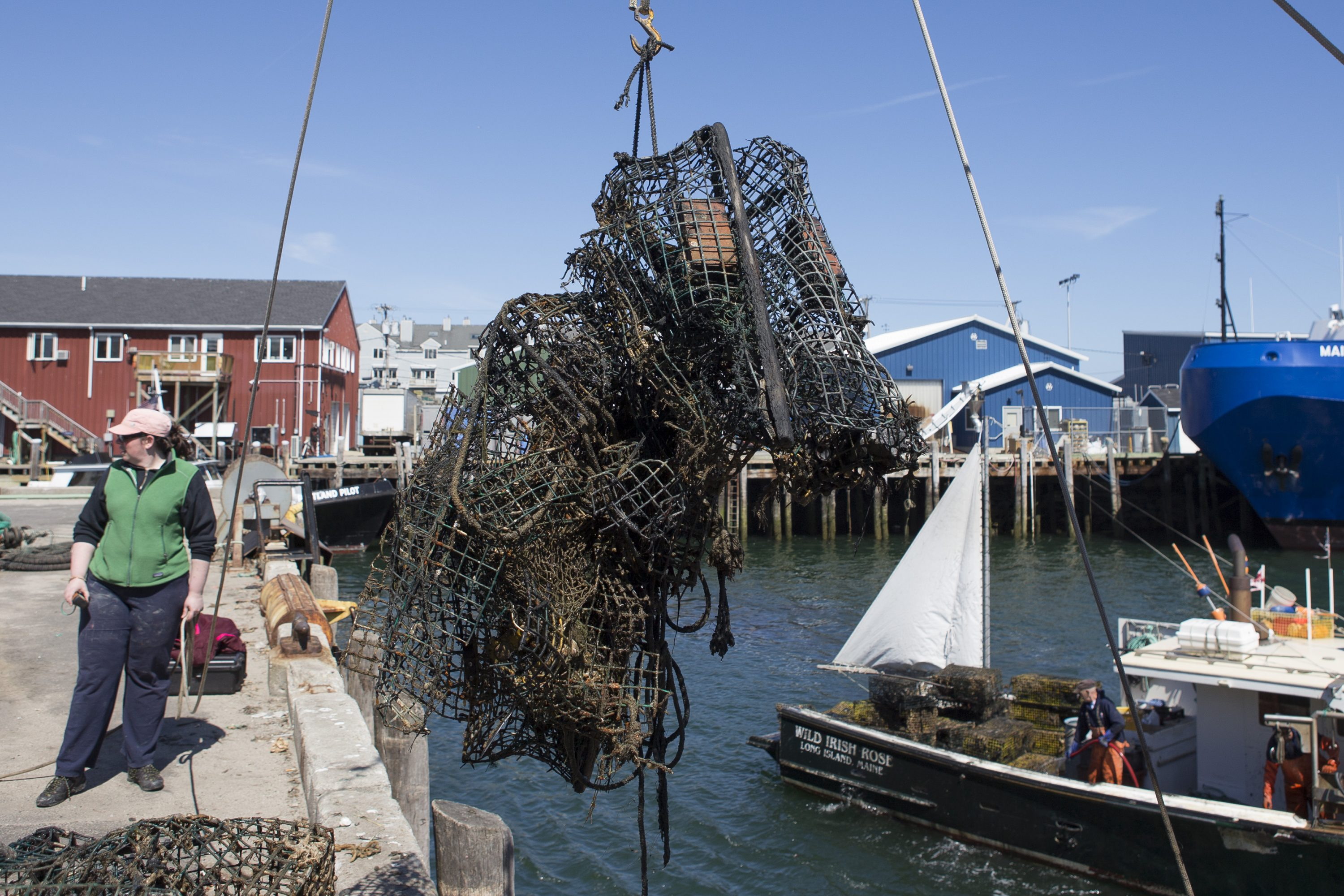 World Animal Protection - Gulf of Maine - Derelict Gear Removal