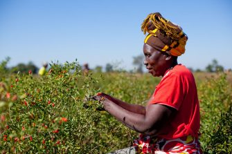 Sustainable Agriculture is the Key to Ending Hunger